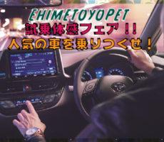 試乗体感フェア!!~人気の車を乗りつくせ!~